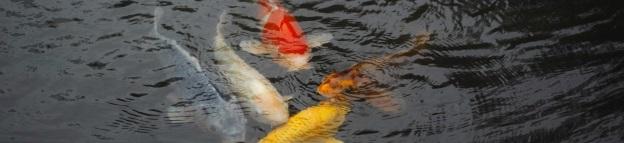 庭に池を作ることは吉か凶か家相・風水から解説