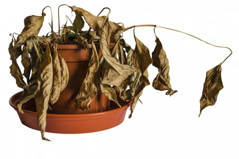 風水・家相を活用したい方必見!観葉植物を置くだけの簡単開運法
