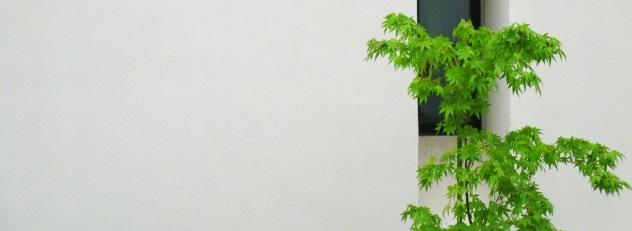 シンボルツリーが運気を左右する?家相から見る木の選び方