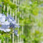 家相で考える家の境界線に塀やフェンスを設置する意味
